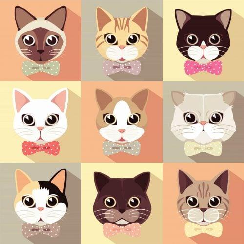 Catstomer Service